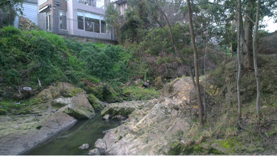 Picture of Back Creek, Glen Iris with house in the background.