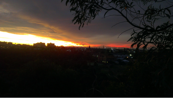 Sunset over city, gum in foreground