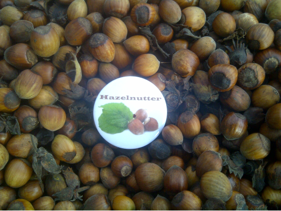 Lots of hazelnuts with badge saying 'Hazelnutter'