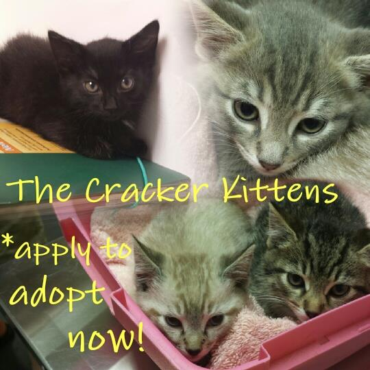 cracker kittens