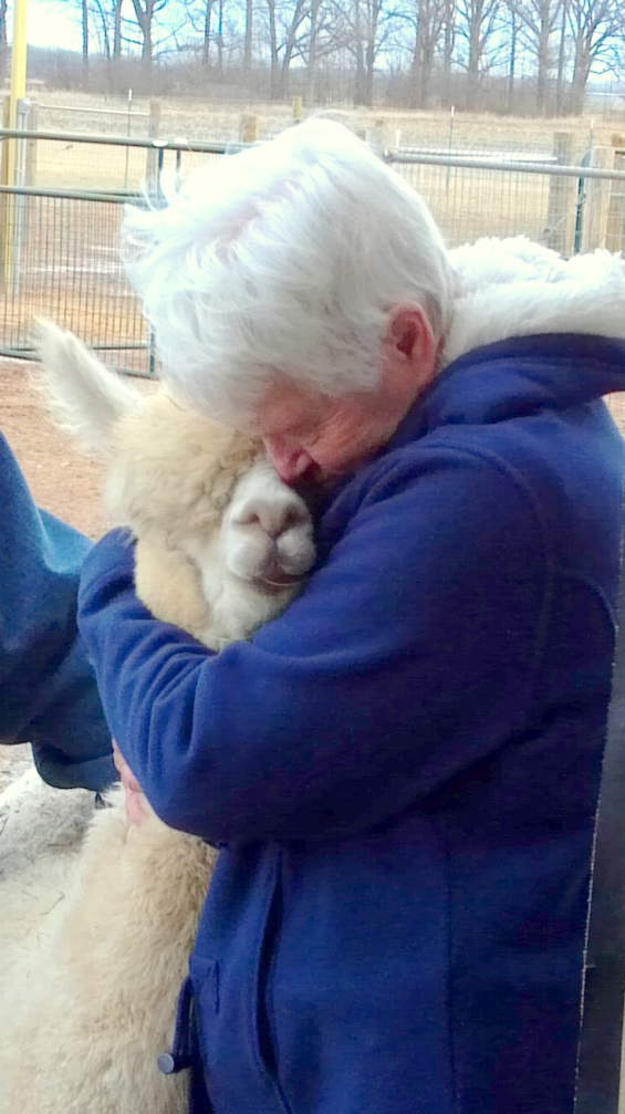elderly lady hugging an alpaca