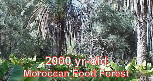 2000 year-old Moroccan Food Forest
